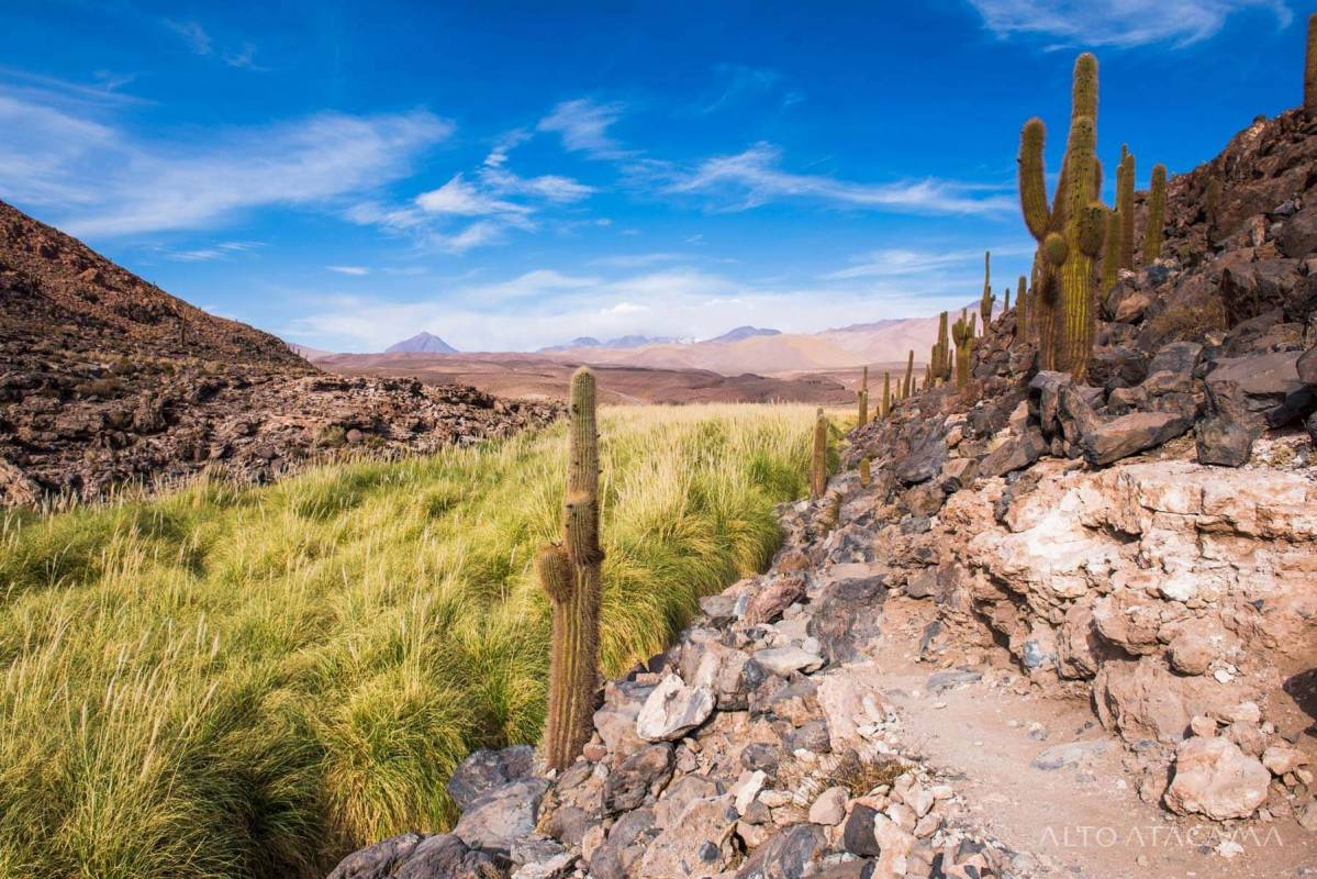 A view on the exotic fauna at the Atacama-desert